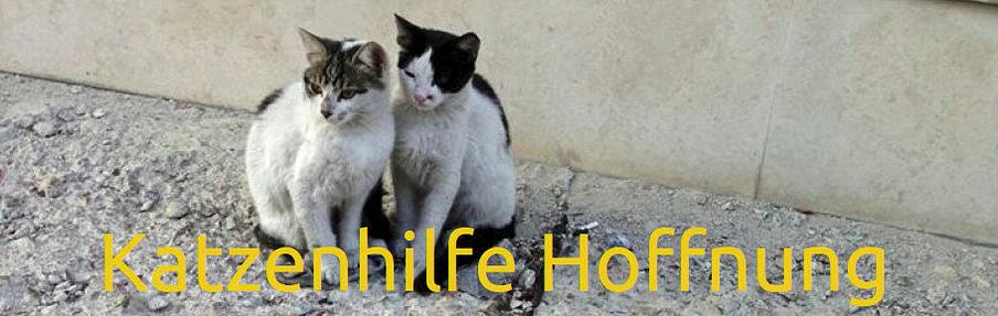 Katzenhilfe-Hoffnung